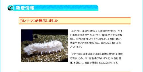 上越市立水族博物館 新着情報