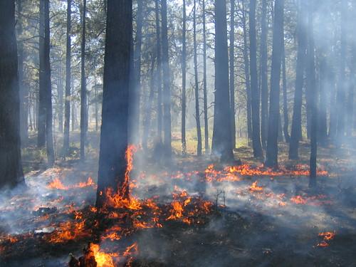 Wildland fire in Boulder