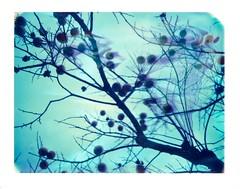 - (Ilaria ) Tags: winter polaroid blu ferrara expired 669 colorpack peelapart colorpackii