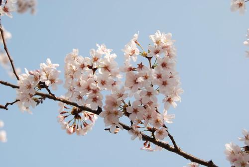 代々木公園にてお花見