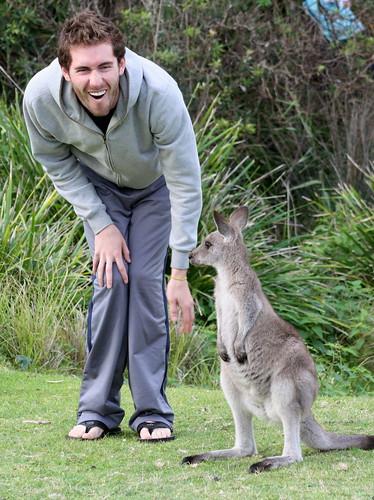 Pebbly Beach Kangaroos Australia - 083