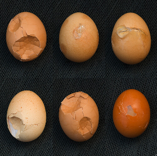 discarded eggs at an organic farm
