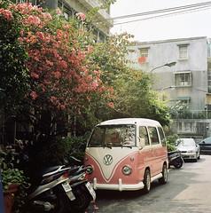 pink,pink ( ken ) Tags: pink 120 6x6 film car minolta kodak taiwan rhododendron taipei    flowerstreet     autocord ektacolorpro160