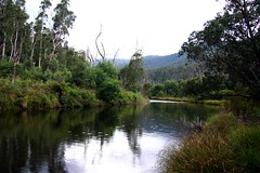 Swampy Plains River at Old Geehi Hut (iansand) Tags: geotagged australia nsw raindrops snowymountains kosciuszkonationalpark swampyplainsriver autumn2010 geo:lat=36360211 geo:lon=148163153