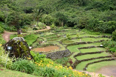 limahuli terrace garden