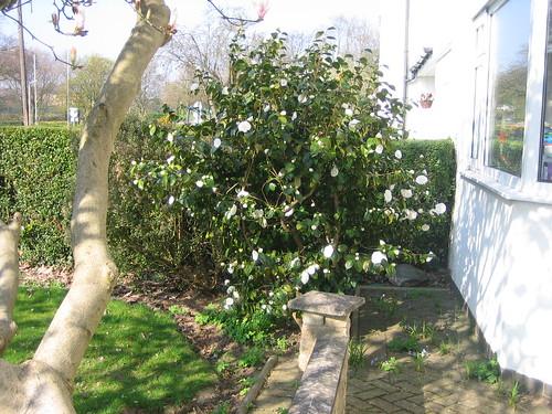 garden042010 066