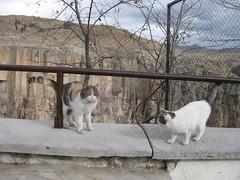 Greme (Canadian Vagabond) Tags: travel cats pets animals turkey backpacking goreme