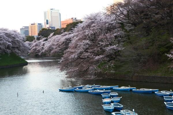 粉紅東京184