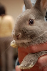 Howdy! (Carly & Art) Tags: pet cute bunny dc washington md furry day baltimore adoption hrs houserabbit justlooking houserabbitsociety