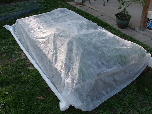 West Bed with Row Cover