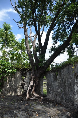 Tree growing inside the a church covered by lava about 100 years ago