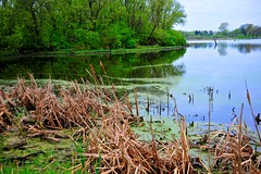 spring waterscape (thomassylthe) Tags: flowers trees sky color nature water birds reflections landscape geese illinois nikon wildlife telephoto ripples nikkor digitalnature flikr blossums waterscape d700 thomassylthe
