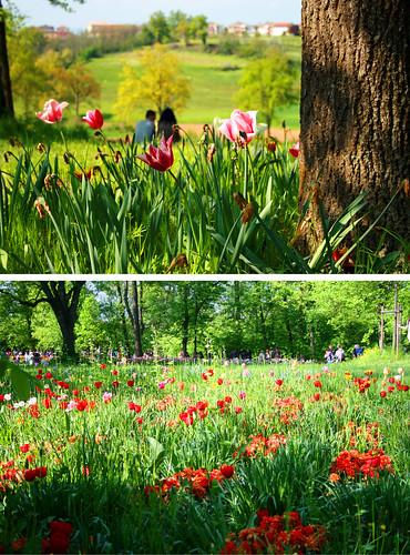 Mostra tulipani al castello di Pralormo Piemonte