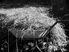 a barrow full... (YAZMDG (15,000 images)) Tags: light bw black grass sepia dark studio lowlight noir shadows gloomy y noiretblanc tint nb sombre ambient blackout wheelbarrow yaz obscure obscur melancholic absence shadowy melancholie lacunae lacune yazminamicheledegaye yazmdg obscuritee