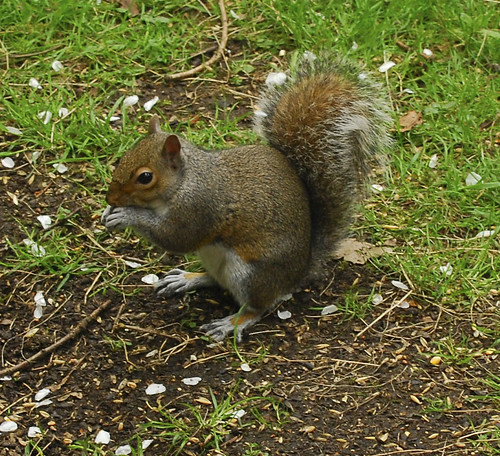 Squirrel l