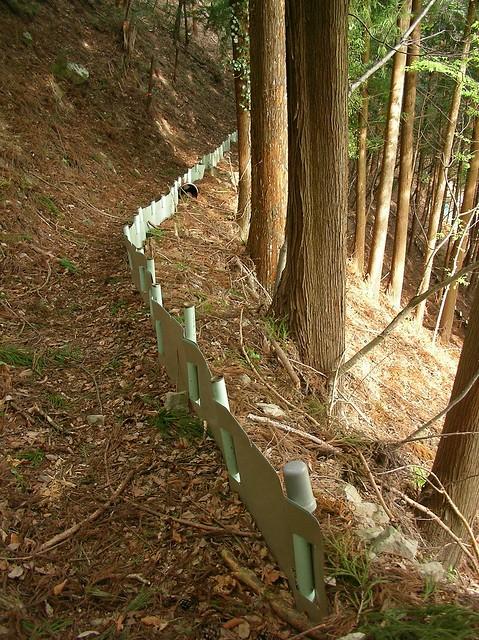 親川へ(飛龍山トレッキング) Mt.Hiryusan Trekking