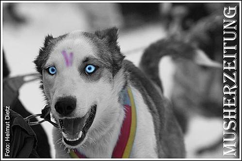 25-Henry-Coronica Leaddog