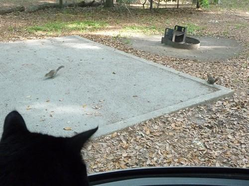 yoda looking at squirrels.