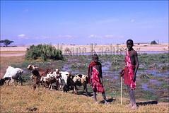 10051195 (wolfgangkaehler) Tags: africa children kenya african goat waterhole goatherd masai maasai amboseli kenyan localpeople herder traditionalclothing nativepeople masaipeople goatherder localboy amboselikenya nativeboy masaichildren maasaitribe masaiboy localyoungman
