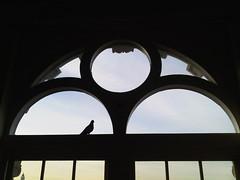 Paula Wilson - Pigeon