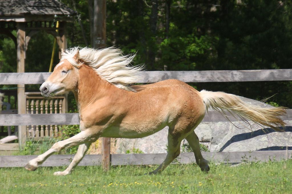 horses 144x