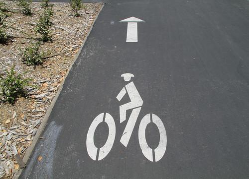 Stanford - ciclistas chinos delante