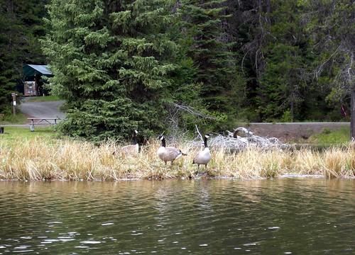 moose creekA5