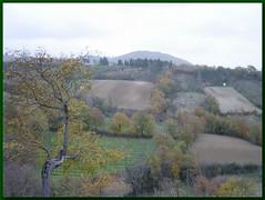 Cospaia fields