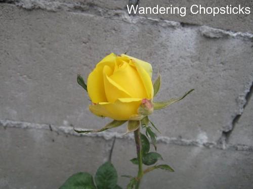 4.29 St. Patrick-ish Rose