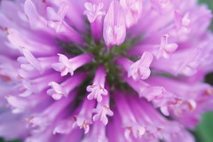 Macro World ( Spice (^_^)) Tags: pink plants flower macro green art japan canon geotagged photography eos petals interesting flora asia flickr colours purple image wordpress picture vivid blogger pistil livejournal stamen  vox    gettyimages facebook friendster multiply saitamaken    twitter  canoneos7d twitpic