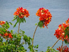 Red over dead (Gaby.Bernstein) Tags: red flower tree water leaves israel leaf gaby blossom deadsea bernstein flowrers bernsteingaby gabybernstein