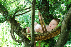 The Giving Tree (Suzanne Pyle Photography) Tags: new summer baby tree green leaves ava spring eyes infant child basket sweet daughter naturallight suzannemarie suzannepylephotography