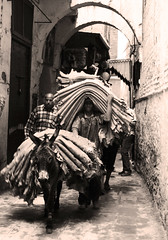 Morocco 2010 (mich_obrien) Tags:  donkey morocco fez fes httpmichelleobriennet