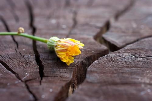 Flower on a Log by giev, on Flickr