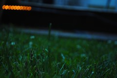 lying around (meghans wishes) Tags: summer green grass yellow yard happy gold focus bokeh tagged deck porch worried meghanswishes