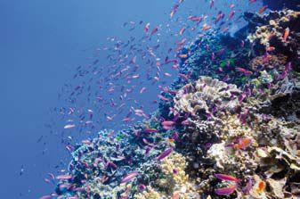 美麗的海洋,是生命起源處。然而在人類予取予求之下,也面臨了燈枯油盡的危機