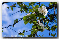 20100426_UnderTheAppleTree