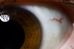 060810 (AgentThirteen) Tags: iris macro eye eyeball 365 retina reversemacro