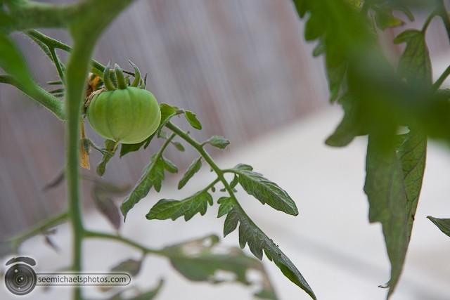 Backyard Garden 61010 © Michael Klayman-002