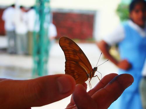 Mariposa en mi mano (1)