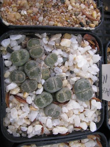 some of my seedlings 4702438925_e119ebce49