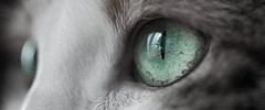 Tapsy eyes (sake028) Tags: cat canon eyes katze grn makro auge tapsy 5dmarkii