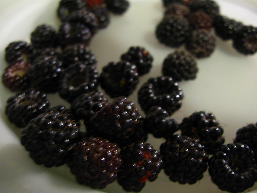 Blackberries for breakfast
