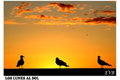 LOS LUNES AL SOL (trescientossl) Tags: naturaleza sol galicia gaviotas ysplix