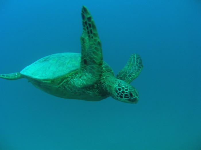 scuba diving oahu 049