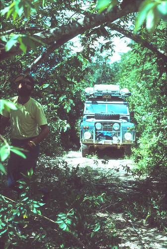 In the Peten jungle (Guatemala)