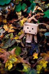Aux couleurs de l'automne (Zaskars) Tags: autumn orange brown yellow forest jaune automne toy pentax sigma figurine 1770 leafs lorraine jouet fort brun feuilles moselle walle yotsuba danbo revoltech k10d tenteling bousbach