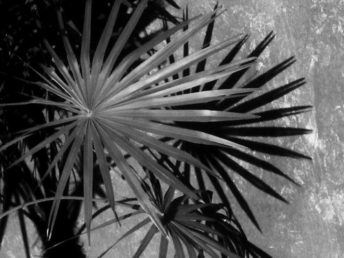 Palm Tree Leaves and Shadows