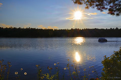 Evening Glow (Lindaw9) Tags: shanty bay lake sun rays treeline rock daisies pinetree northern ontario