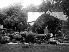after the storm (salparadise666) Tags: voigtländer bergheil 9x12 heliar 135mm planfilm sheet film cut vintage camera large format nils volkmer bw black white fomapan plate germany hannover caffenol rs garden tree monchrome